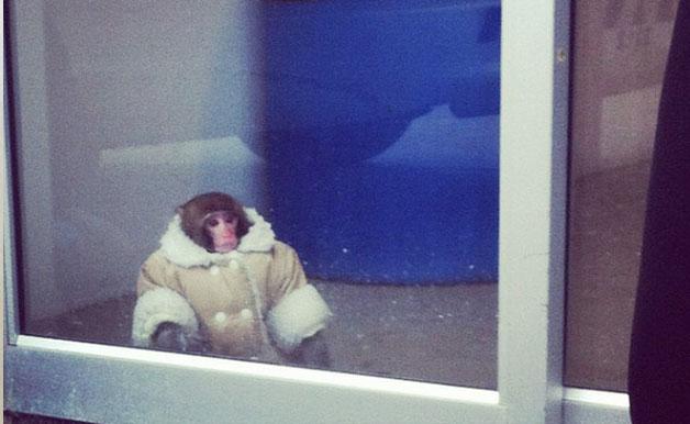 Funny-Ikea-Monkey-628